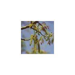 BACH VIRÁGESZENCIA DIÓFA 10 ml - A világra segítő virág